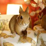 ウサギ店長の写真